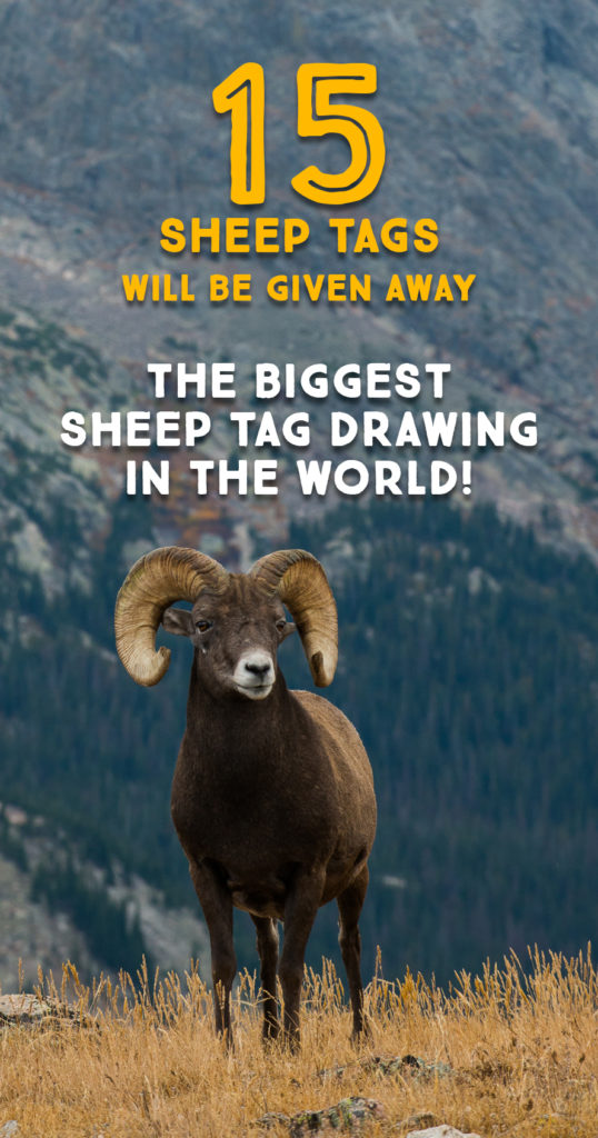 15 Sheep tags will be given away