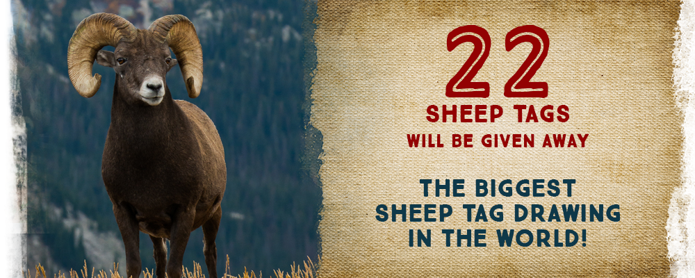 22 Sheep Tags will be Given Away